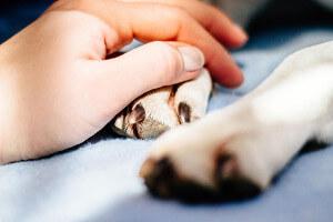 Hund Erste Hilfe Bewusstlosigkeit