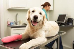 Hunde Erste Hilfe Knochenfraktur