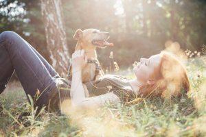Beliebte Hunderassen
