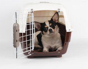 Hund im Auto transportieren kleine Hunde